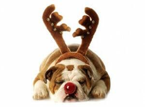 Christmas_maina