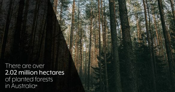 planted forests for sustainable paper production